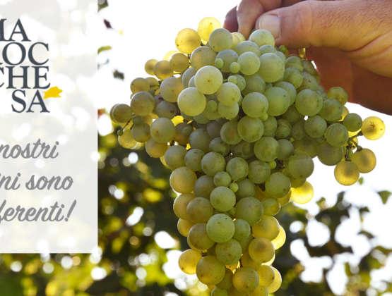 L'acino d'uva e le sue caratteristiche
